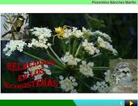 http://cplosangeles.juntaextremadura.net/web/edilim/curso_4/cmedio/el_ecosistema/las_relaciones/las_relaciones.html