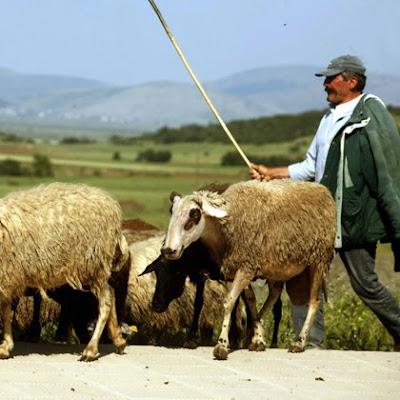Δήμος Σουλίου: Μέχρι 13 Μαΐου η δήλωση των ζώων από τους κτηνοτρόφους