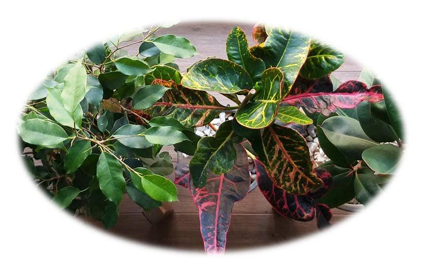 Czy kwiaty w Twoim domu też potrzebują reanimacji po zimie?