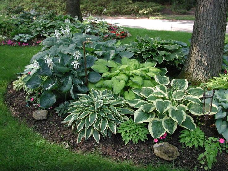 Two Men And A Little Farm Hostas Under Trees Inspiration Thursday