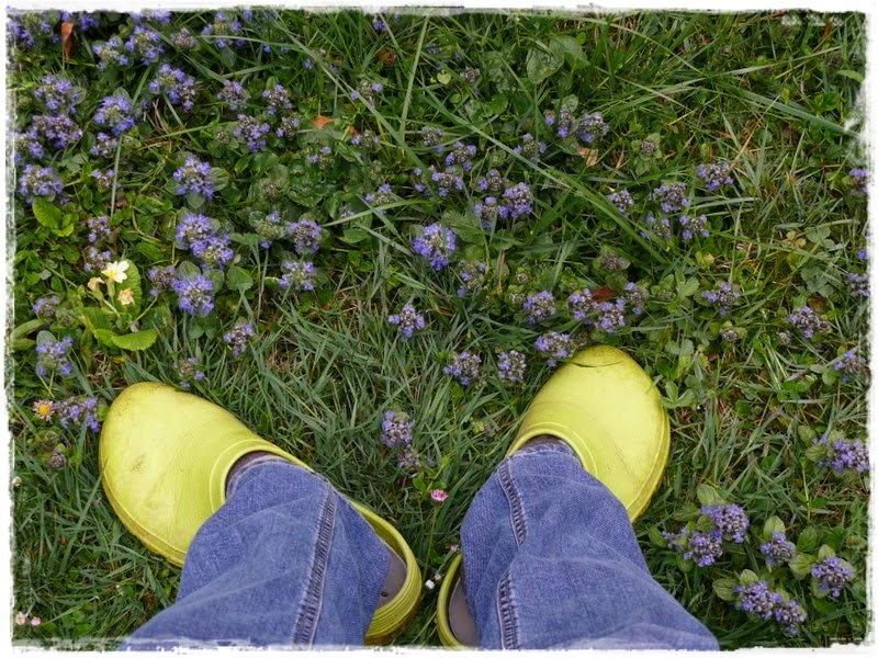 Gwundergarten Let S Fetz Let S Groove
