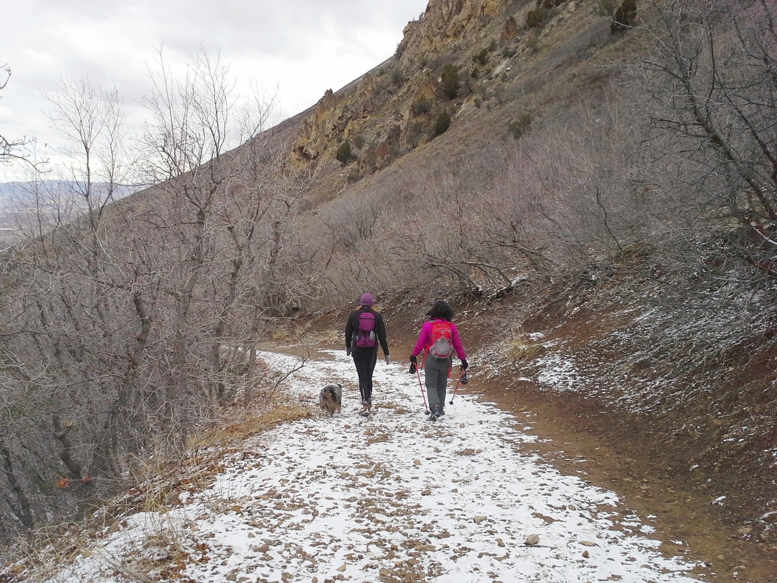 wasatch front hiking trails for dogs