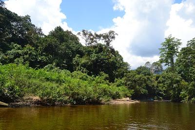 Air sungai terlihat coklat tapi dasarnya terlihat
