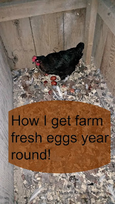how to | farm fresh eggs | winter