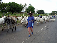 WHY WE ARE AGAINST CATTLE RANCHING – FULANI HERDSMEN