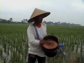 Petani di Jombang Kesulitan Peroleh Pupuk, Ini Penyebabnya