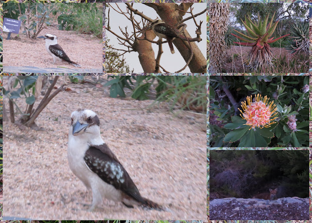 What to see in Perth: Kookaburras, Foxes, and flowers at the Western Australian Botanic Gardens