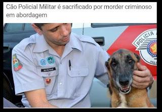 O cão policial Kalifi foi sacrificado por morder criminosos em abordagem