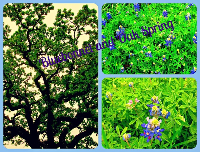 Inspirational Thursday-Bluebonnet Spring