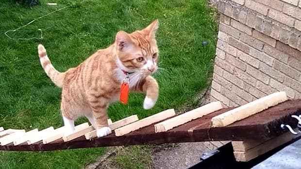Όταν ο ιδιοκτήτης απαγόρευσε τη γάτα μέσα στο κτίριο...ο πανεπιστημιακός φοιτητής Tariz Khoyaratty βρήκε τη λύση!!!(βίντεο)