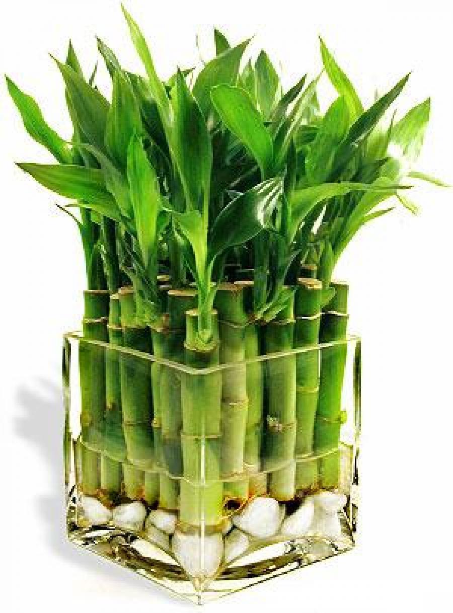 Bambunun Faydaları Nelerdir