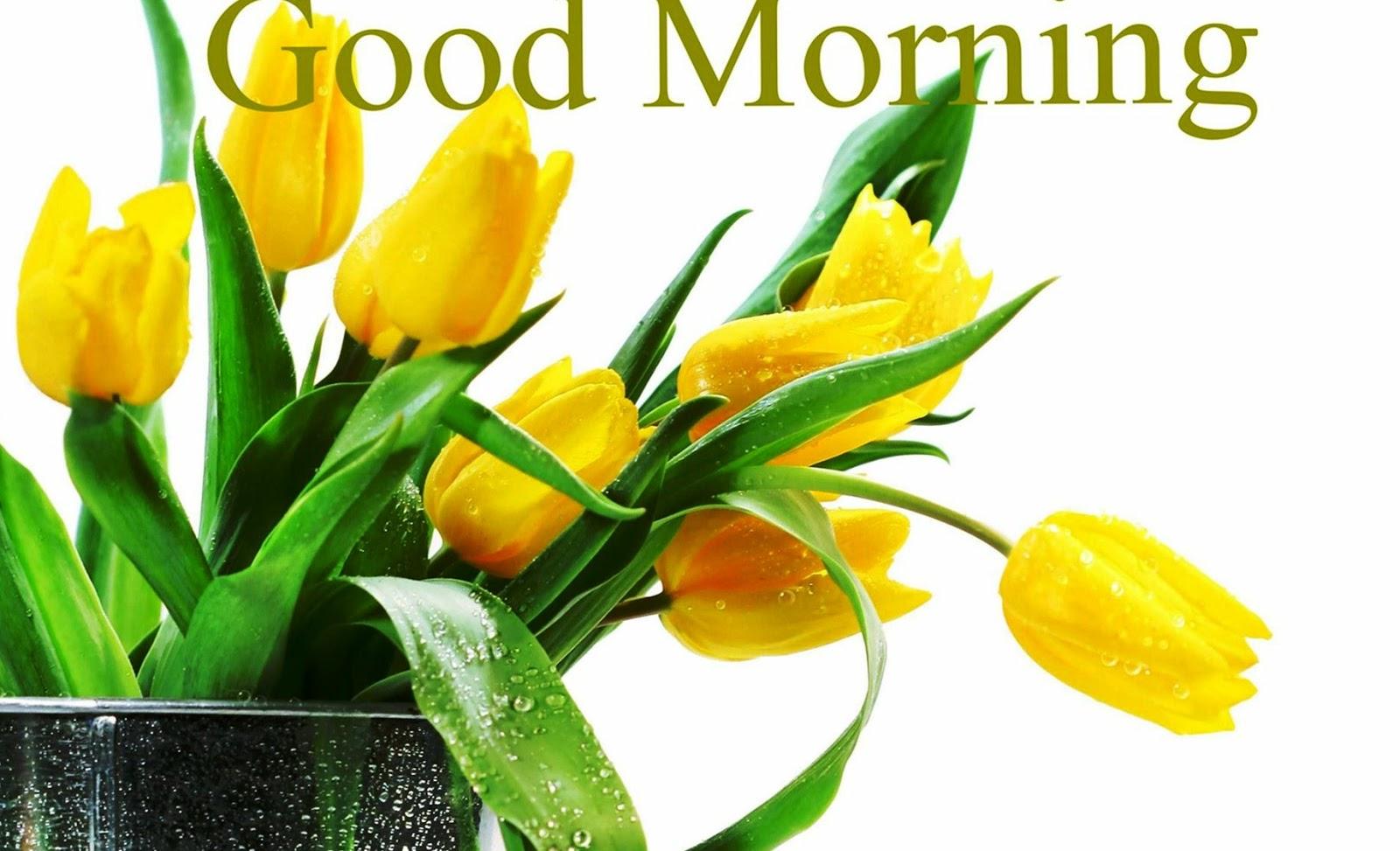 Good Morning Yellow Rose Pic Labzada Wallpaper