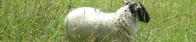 Clic : propriétés naturelles de la laine