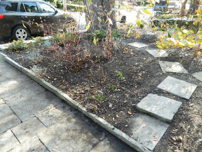 Toronto Greektown on the Danforth Fall Front Garden Cleanup after by Paul Jung Gardening Services