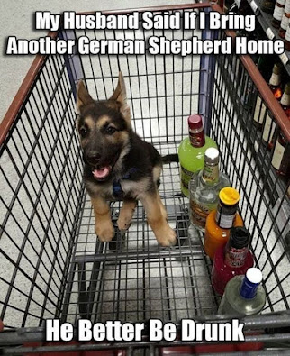 Corona Virus German Shepherd LOL