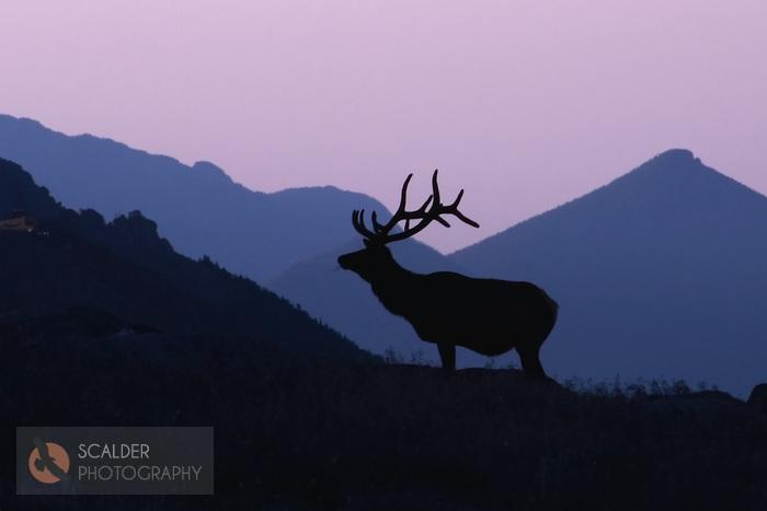 Mountain Pictures Mountains Silhouette