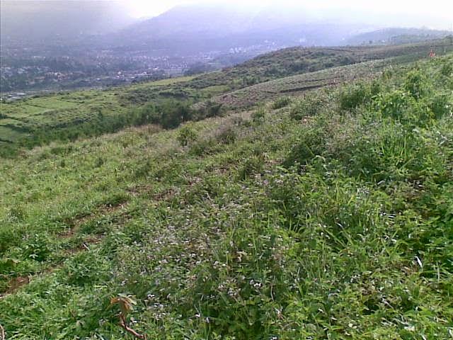Foto(5382) Di Jual Tanah Murah 96 Ha Lokasi Kawasan Puncak Jual tanah di cipanas jual tanah di puncak