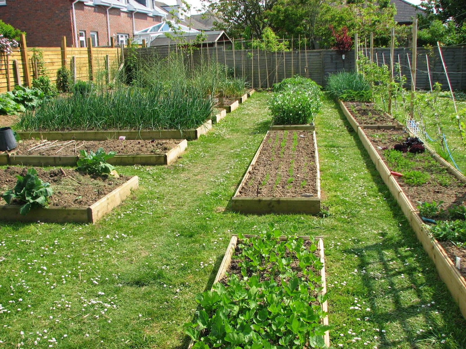 Raised Bed Vegetable Garden Layout Small Backyard ...