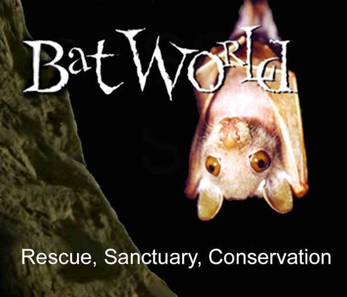http://batworld.org/