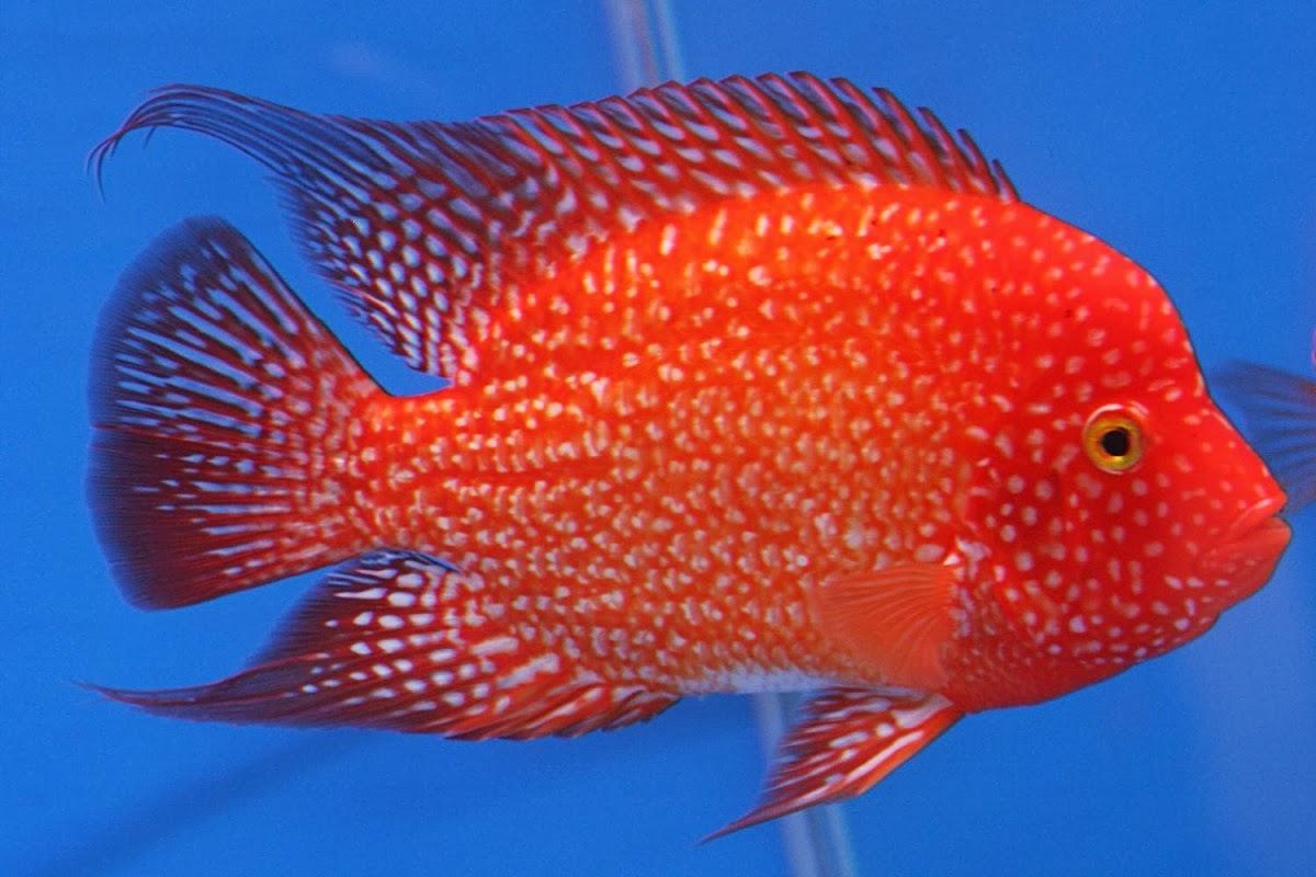 Best Freshwater Aquarium Fish Australia - The Best Fish 2018