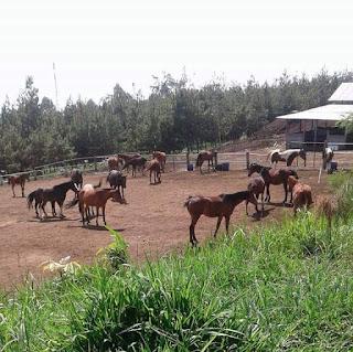 Wisata Berkuda Di Malang, Wisata Keluarga Di Malang, Wisata MAlang Murah, WIsata Malang Terkenal