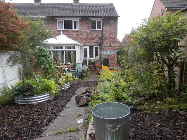 Diary of a suburban edible garden, September 2017. From UK garden blogger secondhandsusie.blogspot.com #permaculturegarden #ukpermaculture #suburbangarden #ediblegarden #sheetmulching #raisedbeds