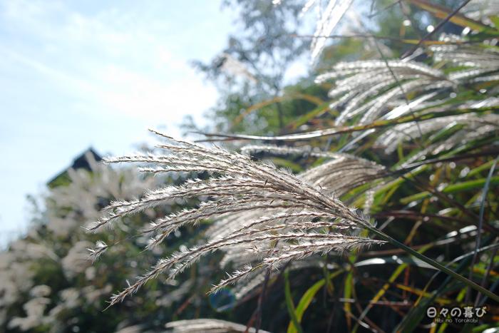 Végétation à Minaminaikaku, détail, parc Yoshinogari, Saga