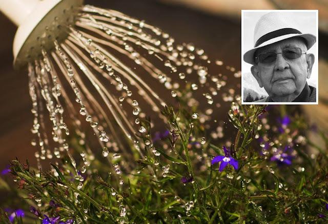 terapia regar plantas ouvir musica classica carlos romero