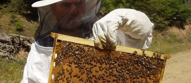 Και όμως αληθινό: Στο εδώλιο μελισσοκόμοι από τον Βόλο γιατί οι μέλισσές τους σκότωσαν ... μουλάρια!