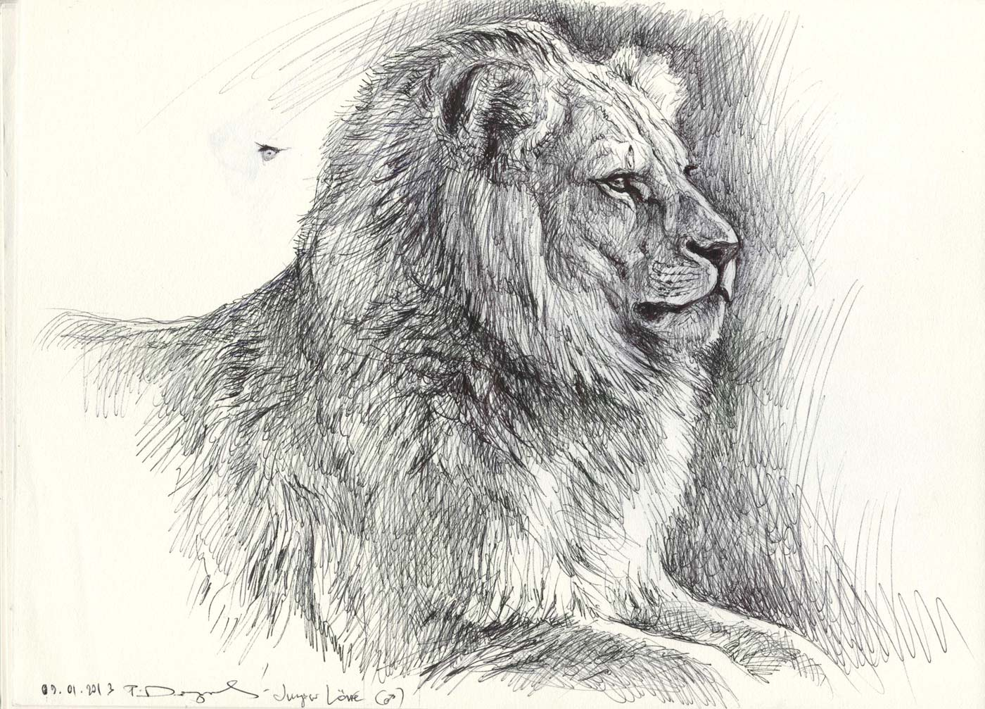Wildlifeart-Life Studies Sketches From U0026quot;Hellabrunnu0026quot; Munich Zoo-today Morning