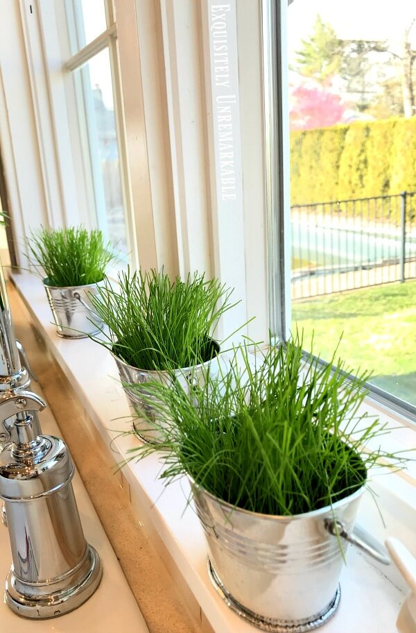 Grass In Pots