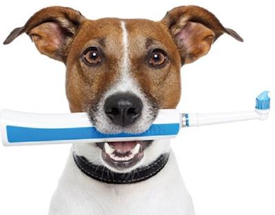 kedi ve köpeklerde ağız kokusu nedenleri