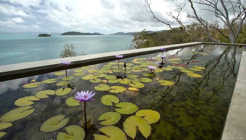 lily pads pond