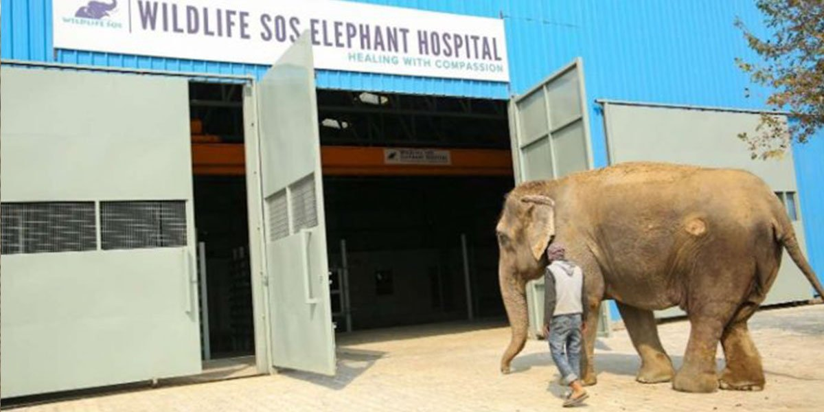 The First Elephant Hospital In India Treats Abused Elephants And Makes A Difference