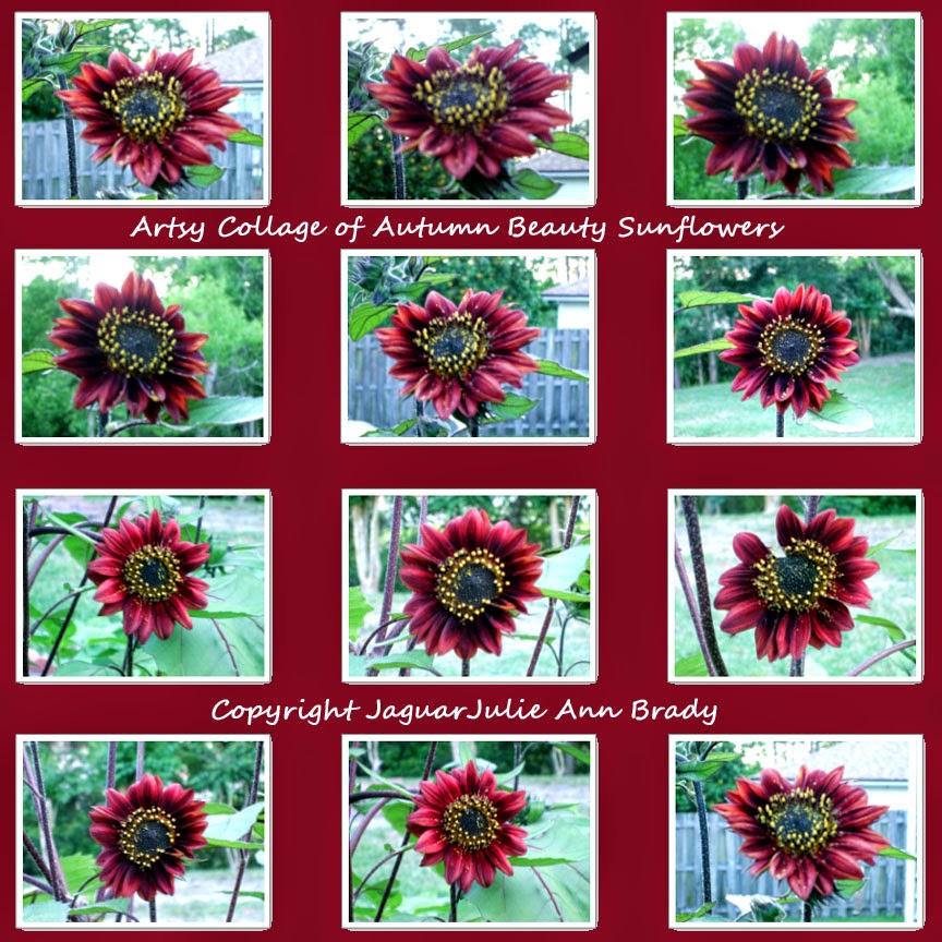 artsy autumn beauty sunflower collage on merlot