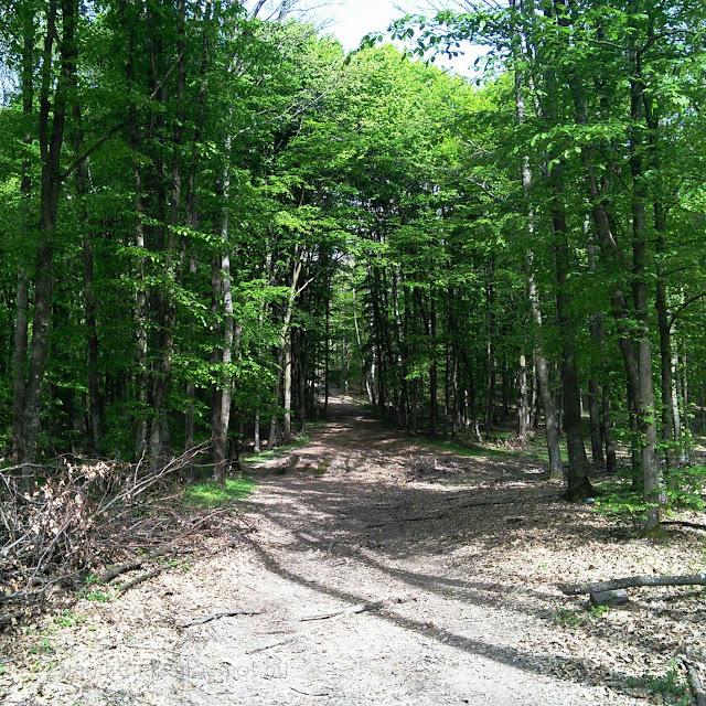 Zarándi erdő tavasszal és erdei úttal