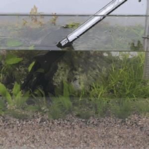 membersihkan aquarium dan aquascape