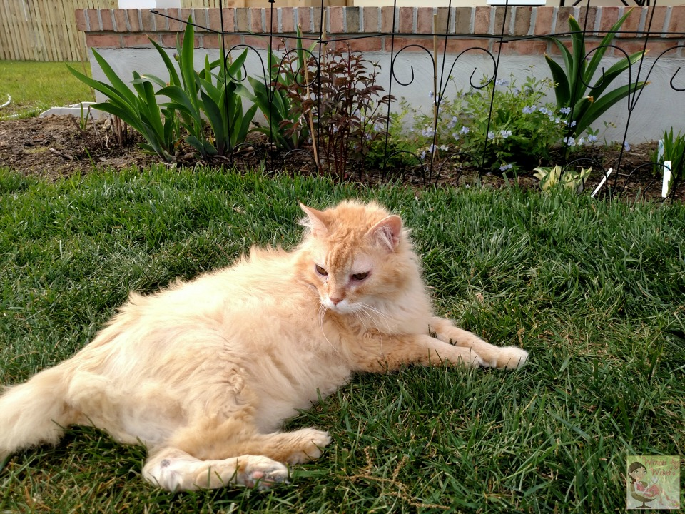 Woven by Words: Wordless Wednesday Cats In The Yard