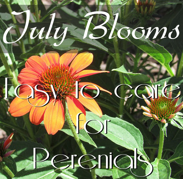 Low maintenance perennials for the garden