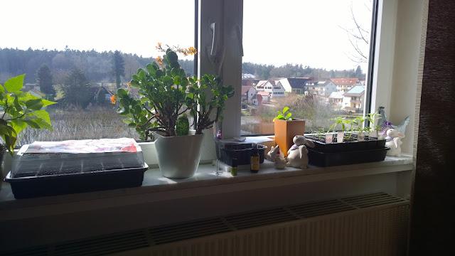 Gemüseanzucht am Wohnzimmerfenster (c) by Joachim Wenk