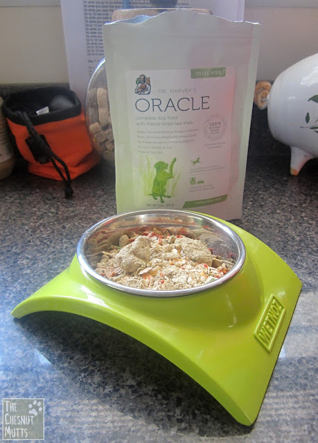 Oracle dog food poured into a bowl