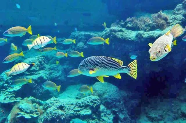 aquarium, Churaumi, fish, Okinawa, travel