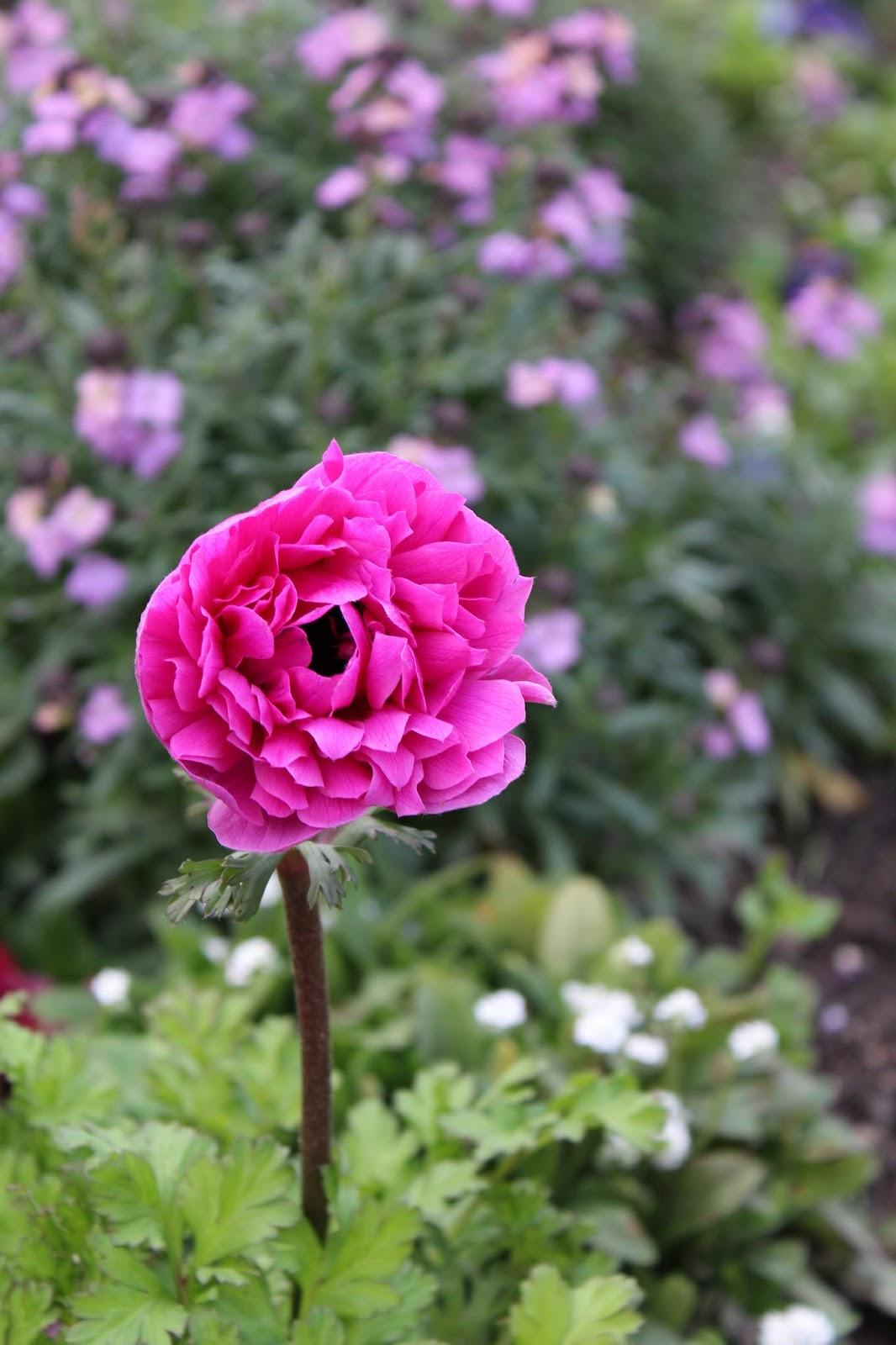 promesse de roses fleurs de saison. Black Bedroom Furniture Sets. Home Design Ideas