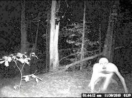 Criatura estranha é filmada em acampamento