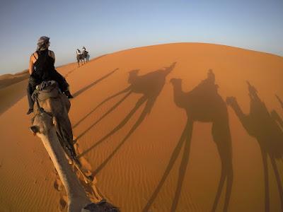 dromedari nel deserto marocco