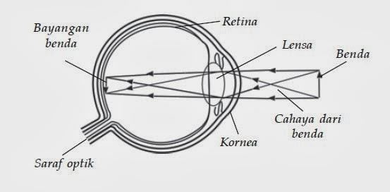 Macam Macam Alat Optik Ilmu Pengetahuan