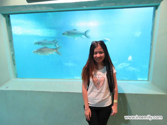 big aquarium in zoo negara