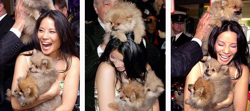 Lucy Liu covered in puppies