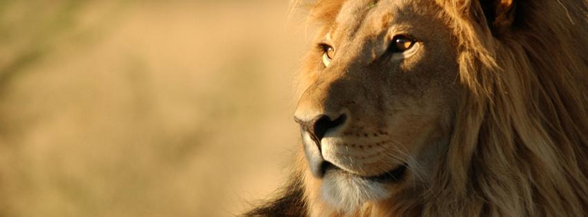 Facebook Cover Photos [Banner] | Free Download: Savanna Desert ...