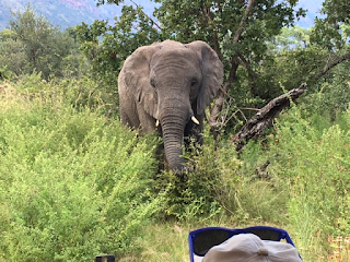 norsu, entabeni, safari, riitta reissaa